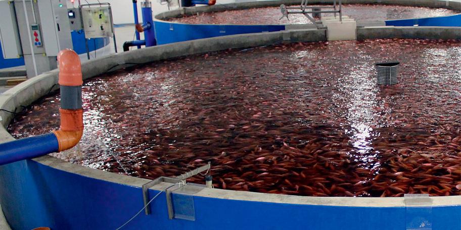 Выращивание рыбы как бизнес рыбоводный модуль осетр 94