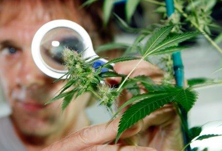 Как отучить подростка от марихуаны причины курения конопли